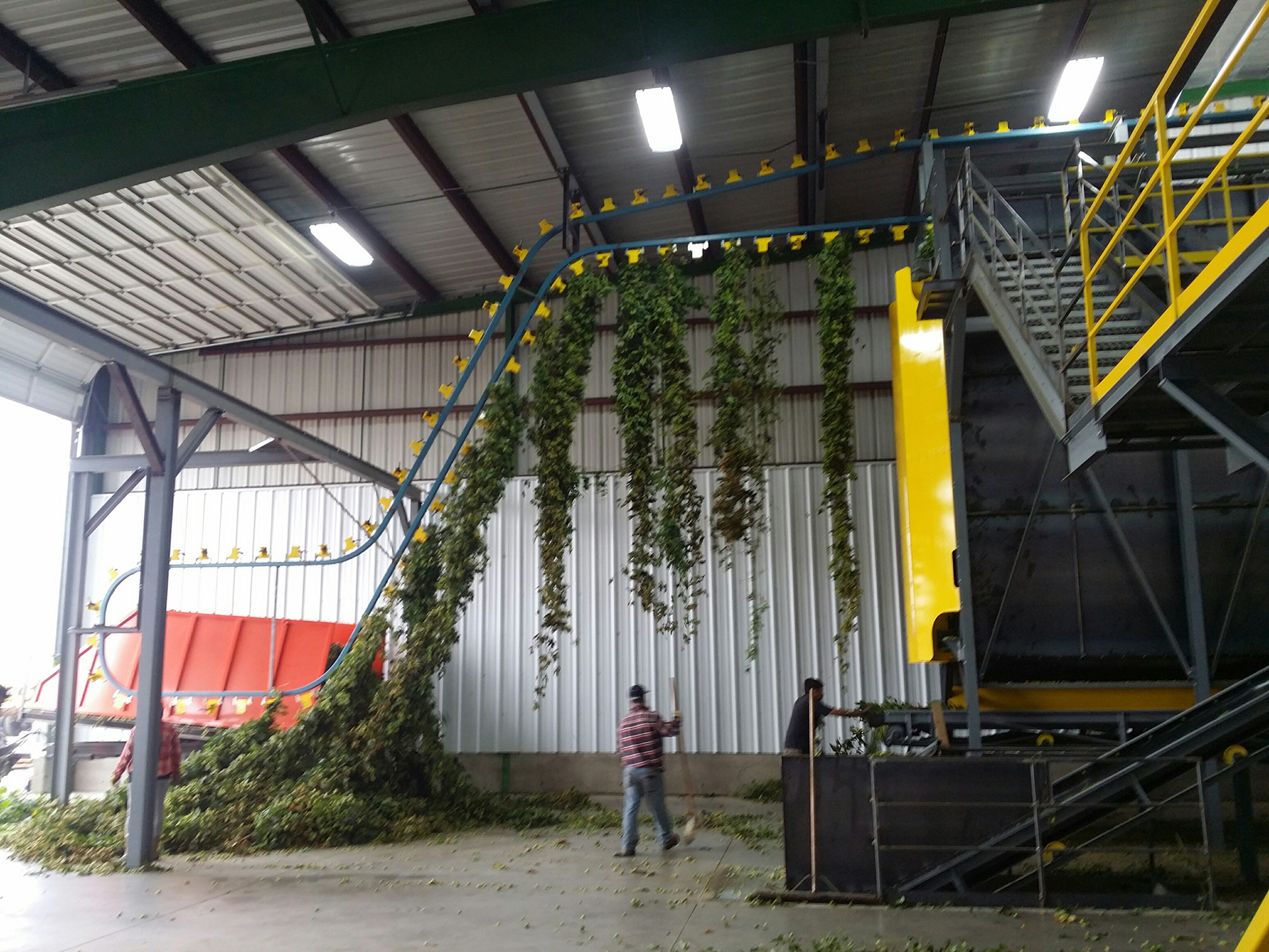 Working on indoor hop system